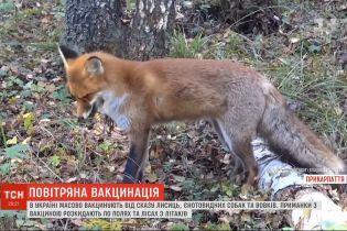 По всей Украине из 16 самолетов проводят массовую вакцинацию диких животных от бешенства