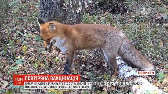 По всій Україні з 16 літаків проводять масову вакцинацію диких тварин від сказу