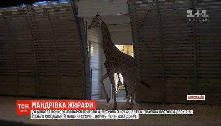 В николаевский зоопарк привезли 4-метрового жирафа из Чехии