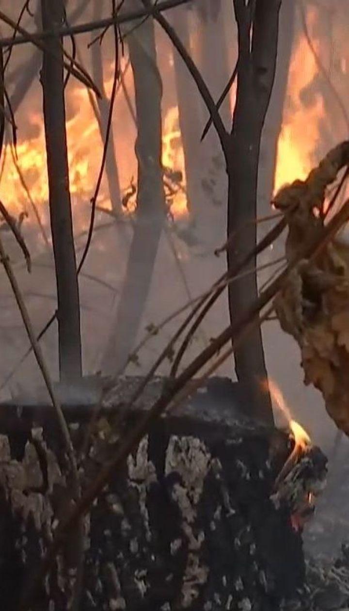 Площадь лесных пожаров в Чернобыльской зоне увеличилась почти втрое