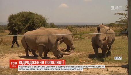 Ученые создали два полноценных эмбриона североафриканского белого носорога