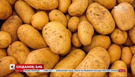 Рекордные цены: стоит ли ждать удешевления картофеля в ближайшее время