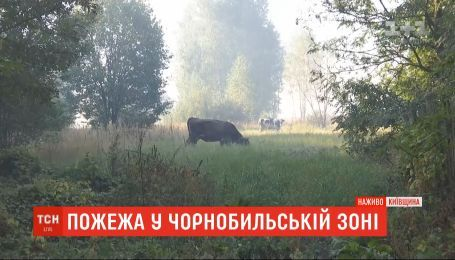 У Чорнобильській зоні тліє близько 14 гектарів лісу