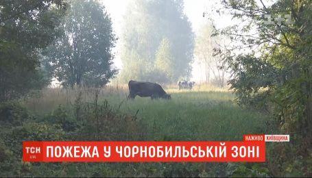 В Чернобыльской зоне тлеет около 14 гектаров леса