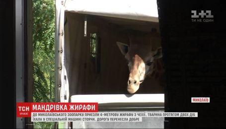 4-метровая жирафа двое суток стоя ехала в спецмашине в Николаев