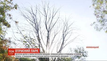 В парке в Кропивницком неизвестные ночью отравили десятки деревьев