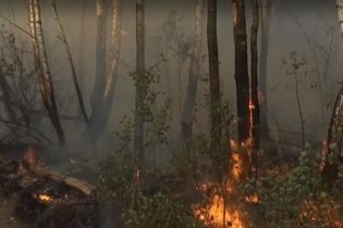 Чернобыльский лес загорелся из-за женской мести - полиция