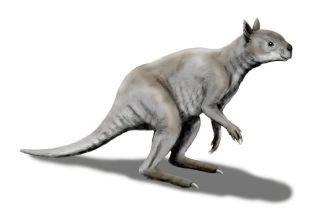 """В Ледниковый период по Австралии ходили огромные кенгуру. У них есть уникальная """"связь"""" с пандами"""