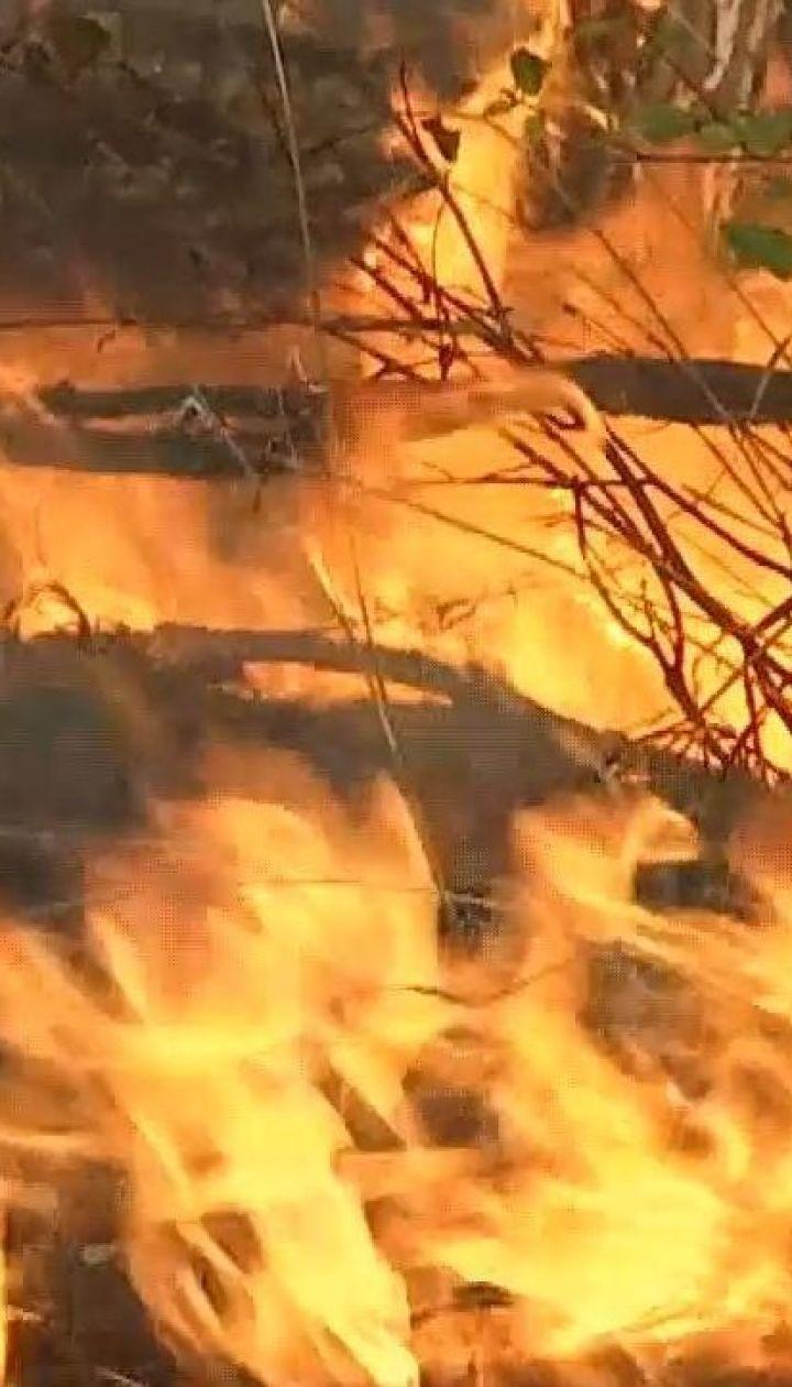 Пожар в Чернобыльской зоне могла повлечь нетрезвая женщина - полиция Киевщины