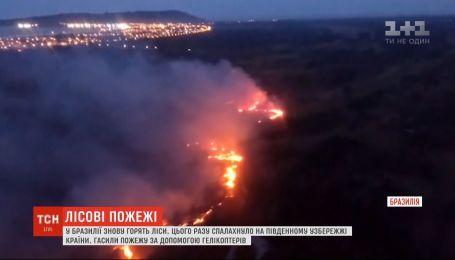 В Бразилии снова горят леса