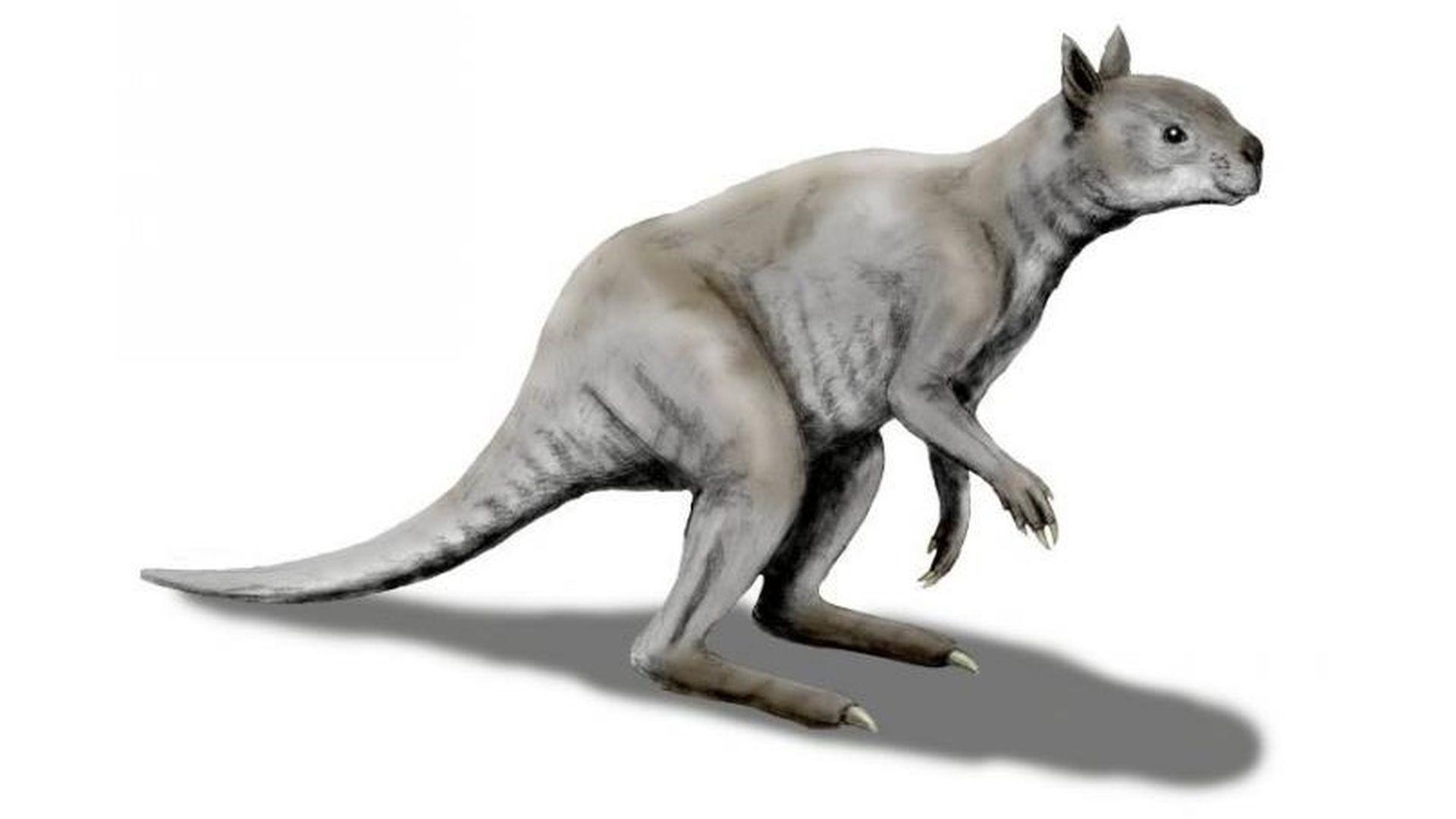 Доісторичний кенгуру