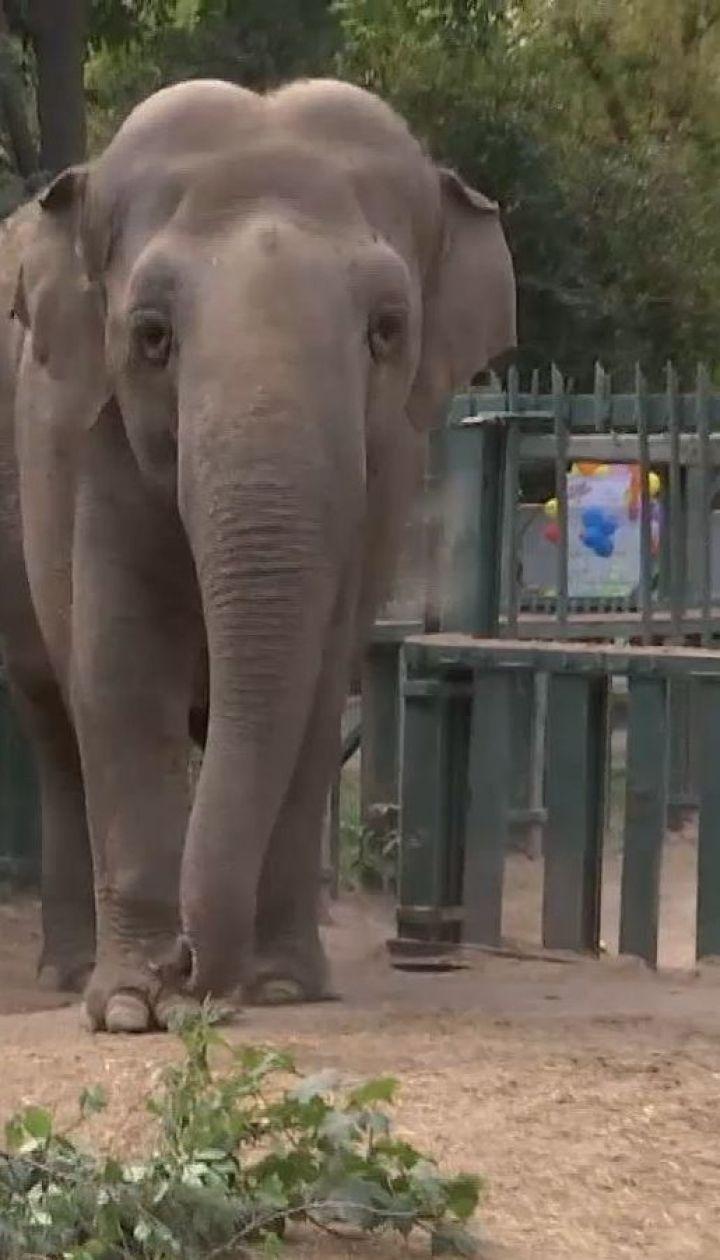 Кошик рожевих лілій і оркестр: в одеському зоопарку слониху Венді привітали з ювілеєм