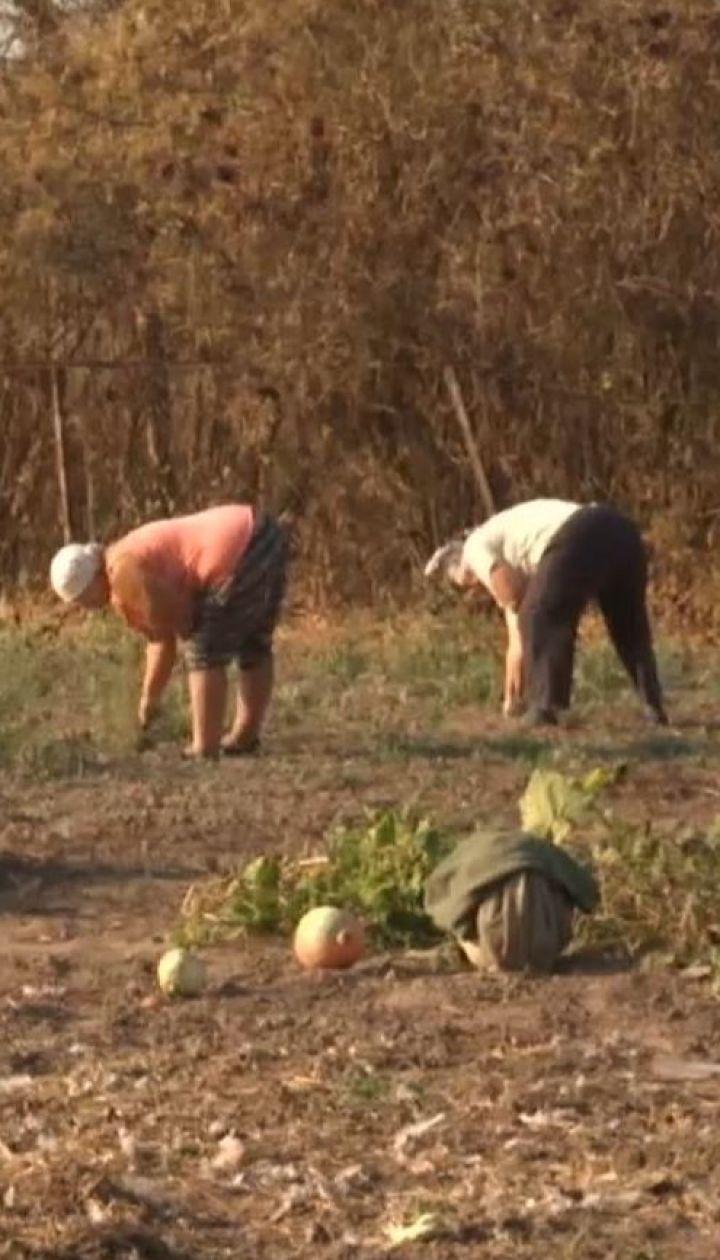 Культ картофеля: что выгоднее - выращивать самому или купить в супермаркете