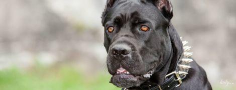 Собака на вулиці: за що і як карають власників собак
