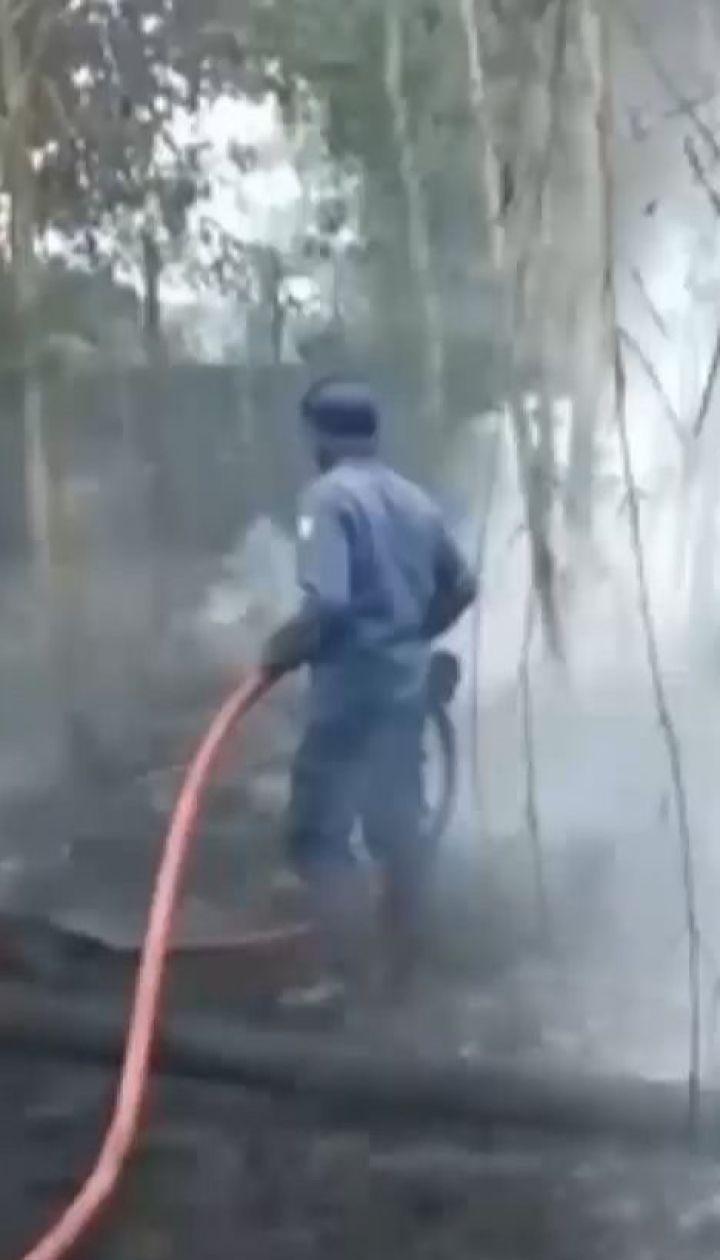 Пожежі в Індонезії знищують місця проживання суматранських орангутангів