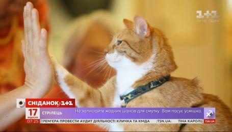 Які неконтрольовані прояви ніжності викликають у людей коти