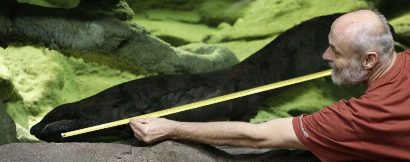 Ученые нашли самую большую в мире амфибию. Ее вид вымирает из-за пристрастия людей к деликатесам