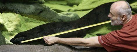 Учені знайшли найбільшу в світі амфібію. Її вид вимирає через пристрасть людей до делікатесів