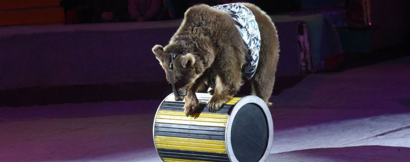 Без животных: украинским цирку дали год на обновление шоу-программ