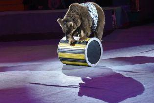 Впервые в Украине: суд запретил городскому цирку использовать животных