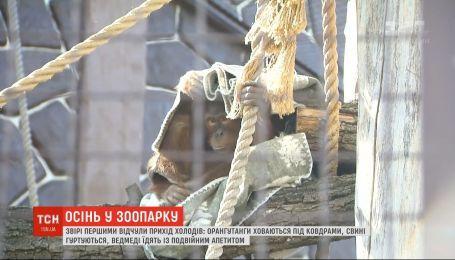 Одеяла для орангутангов и сено для сурков: как в зоопарке под Киевом готовятся к осени