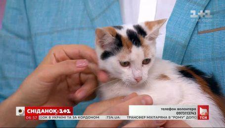 Кошечка Гудзя ищет дом