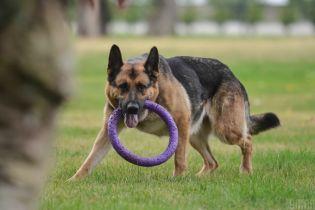 В Киеве состоялся колоритный забег собак вместе с хозяевами