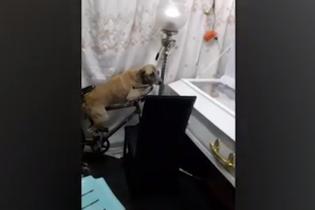 На Филиппинах сняли трогательное видео с собакой, которая прощается с умершим хозяином