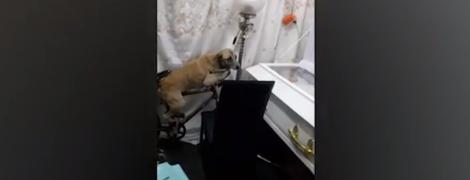 На Філіппінах зняли зворушливе відео із псом, який прощається з померлим господарем