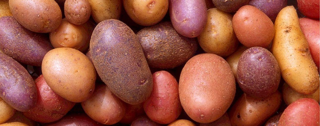 """""""Красная цена"""": почему не уродила картошка и когда ждать подорожания"""