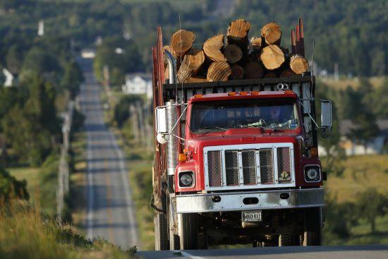 """""""А за деревом дерево"""": як Інтерпол протидіє незаконному вирубуванню лісу і допомагає в цьому Україні"""