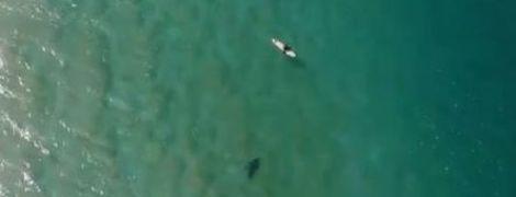 Австралиец спас серфера от акулы благодаря дрону