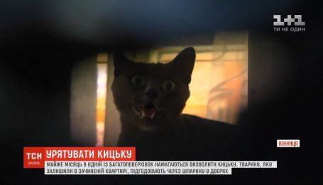 Почти месяц в Виннице пытаются спасти кошку, которую закрыли одну в пустой квартире