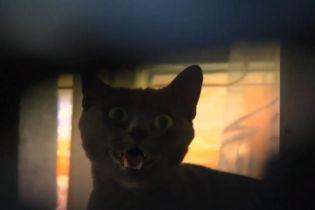 В Виннице хозяева заперли кошку в квартире и исчезли на месяц
