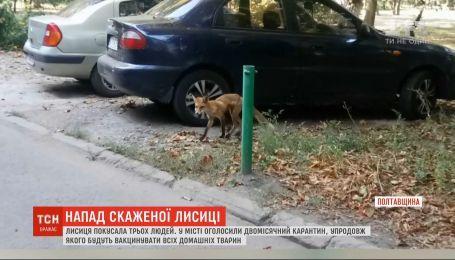 Осторожно, бешенство: в Миргороде лиса покусала трех человек