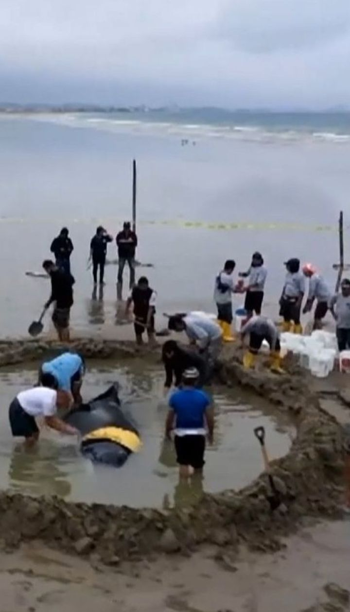 Мешканці Еквадору всією громадою прийшли рятувати кита