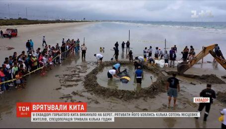 Жители Эквадора всей общиной пришли спасать кита