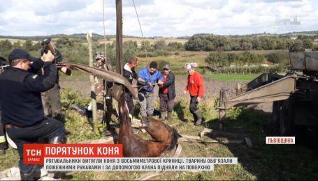 Спасатели вытащили коня из 8-метрового колодца во Львовской области