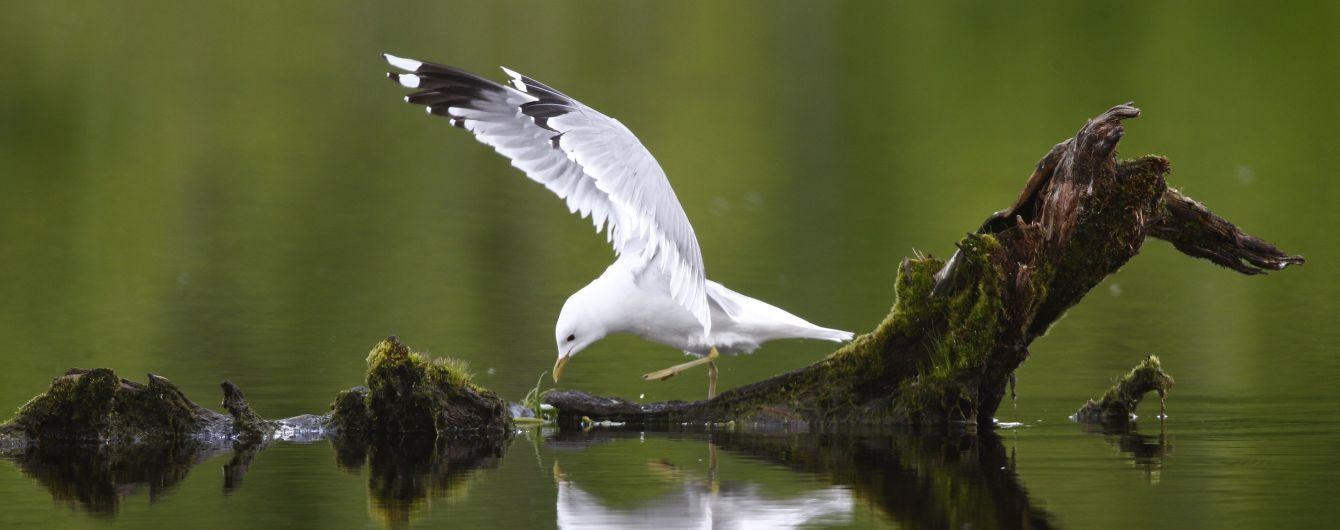 Почти 3 миллиарда птиц в США и Канаде исчезли за 40 лет. В этом виноваты люди