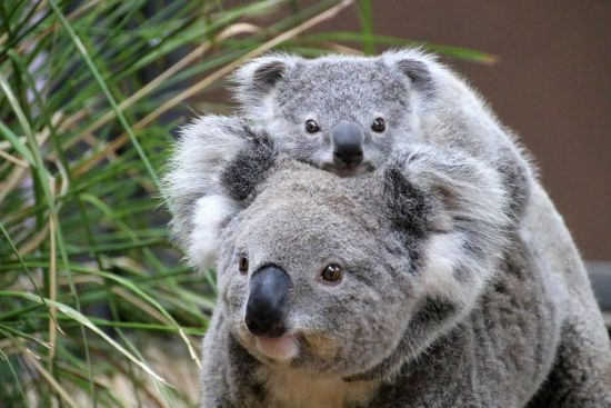 У Сіднеї туристам пропонують готельні номери з панорамою дикої природи