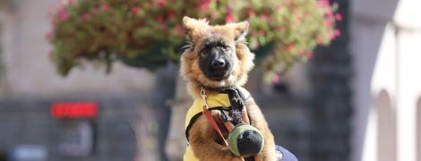 В Киеве пятерых щенков посвятили в спасатели. Теперь у них есть форменная одежда и специальный вольер