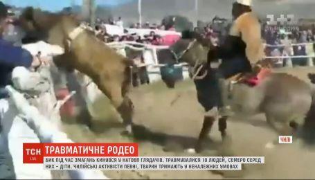 Під час змагань у Чилі бик кинувся у натовп глядачів: 10 людей зазнали травм