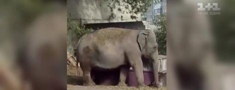 В Харькове сняли на видео прогулку слона