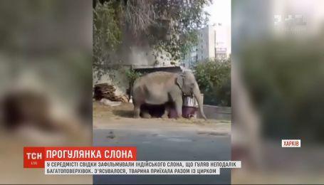 В Харькове горожане засняли слона, который гулял возле многоэтажек