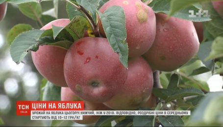 Украинские фермеры жалуются на низкий урожай яблок