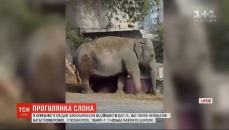 Харьковчане засняли слона, который гулял возле детского сада