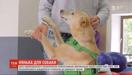 ТСН выясняла 5 правил ответственного собаководства