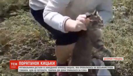С заброшенного колодца вытащили кошку, которая двое суток держалась за ветку, чтобы не утонуть