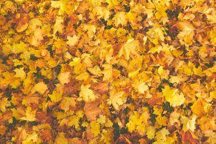 В Киеве впервые в мире тестировали бумагу из опавших листьев