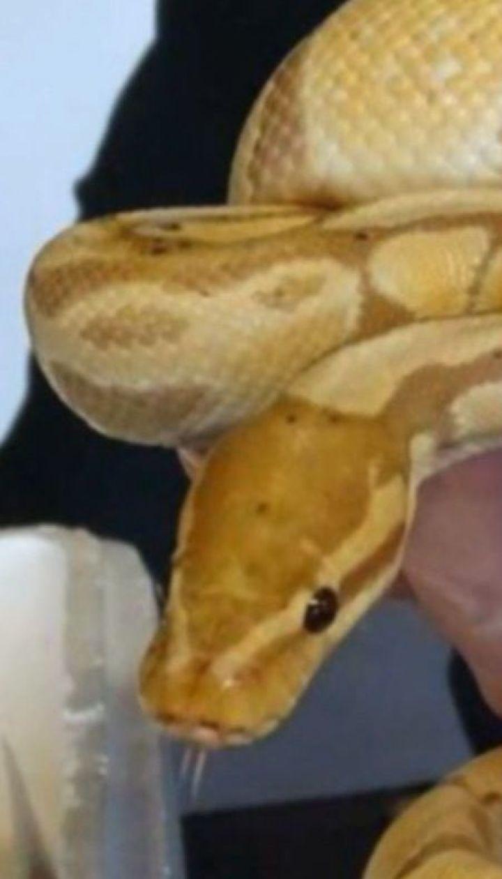Українець намагався вивезти у Польщу понад півтори сотні екзотичних змій та ящірок